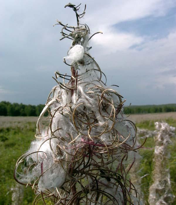 травы от паразитов внутри человека
